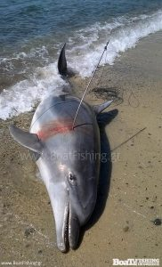 Δελφίνι νεκρό από βέργα αεροβόλου
