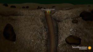 Σκουλήκι Φαραώ- Ο κυνηγός της Άμμου