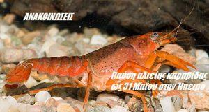 Παύση αλιείας καραβίδας ως 31 Μαΐου στην Ήπειρο