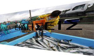 Φτωχότεροι κατά 75,4% οι ψαράδες την τελευταία δεκαετία