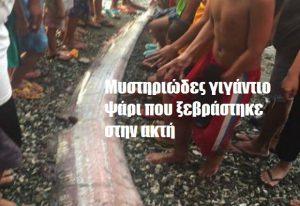 Μυστηριώδες γιγάντιο ψάρι που ξεβράστηκε στην ακτή
