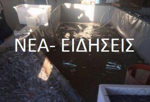 Παράνομο εμπόριο χελιών-Η οργάνωση φέρεται να είχε κέρδη περίπου 1.000 ευρώ ανά κιλό