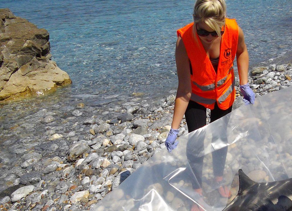 Τι κρύβεται πίσω από τη μαζική δολοφονία χελώνων στο Αιγαίο;