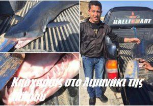 Καρχαρίας στο λιμανάκι της Πάφου