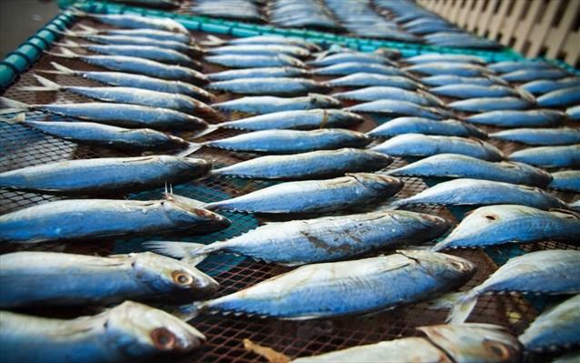 Μάστιγα η παράνομη αλιεία για επαγγελματίες και αποθέματα