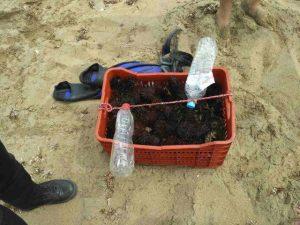 Ηράκλειο: Πρόστιμα για παράνομη αλιεία αχινών