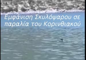 Εμφάνιση Σκυλόψαρου σε παραλία του Κορινθιακού- Βίντεο