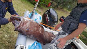 Η ψαριά της χρονιάς: Ψάρεψαν βλάχο 72 κιλών