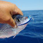 Ψάρεμα μελανουριών με το Chopper 50 της Rage Tackle