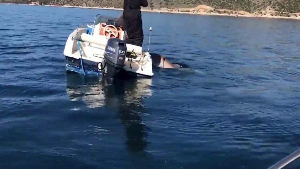 Ναύπλιο: Έριξε την πετονιά στη θάλασσα και έπιασε σκυλόψαρο.