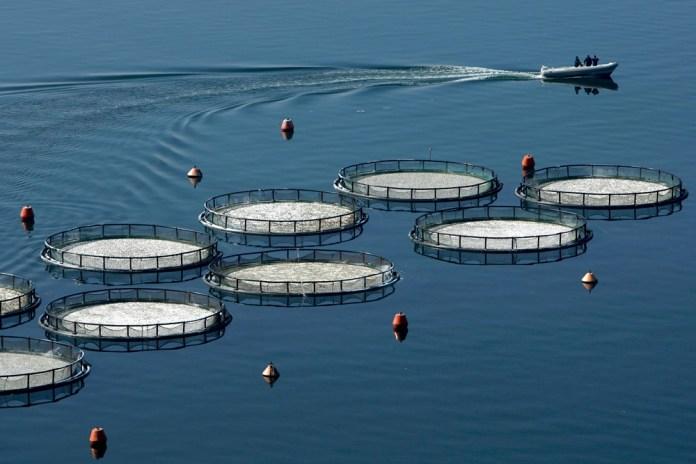 Δίκτυο δημιουργείται για τις υδατοκαλλιέργειες στον Θερμαϊκό