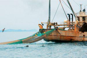 Τι απαντούν οι επαγγελματίες της αλιείας για την υπεραλίευση