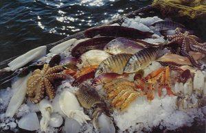Μισός τόνος ακατάλληλα ψάρια θα έμπαιναν στην αγορά