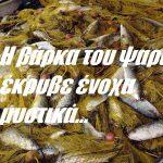 Η βάρκα του ψαρά έκρυβε ένοχα μυστικά…