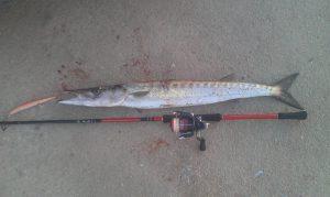 Ψάρεμα λούτσου από ακτή