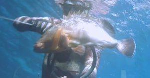 Καλοκαιρινό ψαροντούφεκο- Ροφός