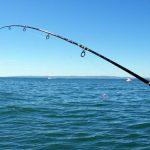 Απαγορεύεται το ψάρεμα για συγκεκριμένα είδη