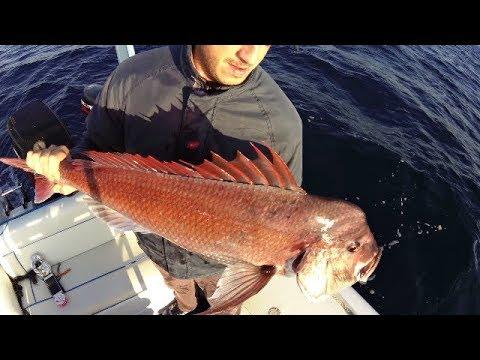 ΨΑΡΕΜΑ – ΖΩΝΤΑΝΟ ΔΟΛΩΜΑ for beautiful fish