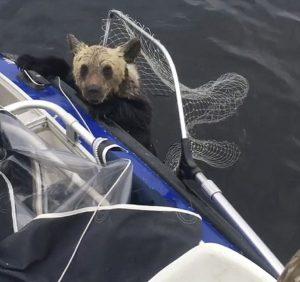 Ψαράδες έσωσαν αρκουδάκια πριν πνιγούν- ΒΙΝΤΕΟ