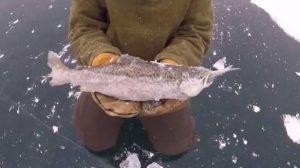 Άναυδοι δύο ψαράδες με αυτό που αντίκρισαν