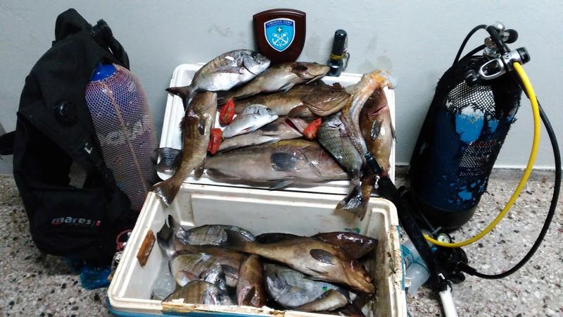 Κατασχέθηκαν παράνομα ψάρια στην περιοχή Πόρτο Λάφια