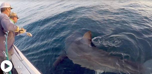 """Ψαράδες """"έπιασαν"""" καρχαρία, ενάμιση τόνο!"""