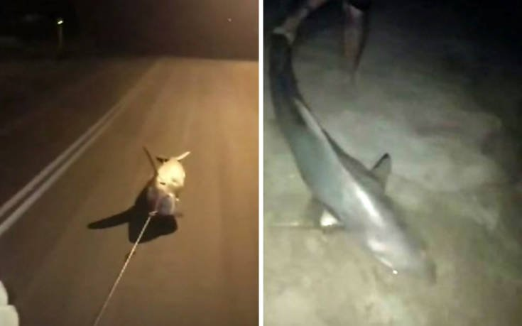 """Ψαράδες """"έσερναν"""" ζωντανό καρχαρία με το αυτοκίνητό τους"""
