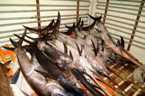 Συνελήφθησαν για παράνομη αλιεία ξιφία