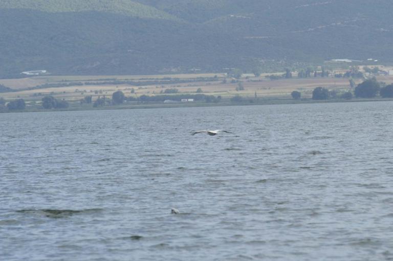 Βρέθηκε νεκρός ο αγνοούμενος ψαράς στη Βόλβη