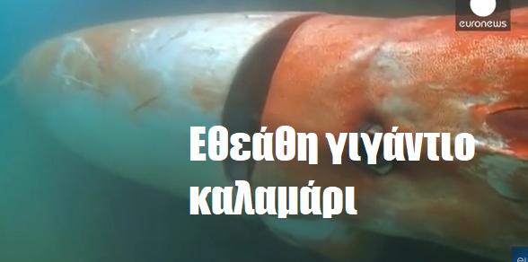Εθεάθη γιγάντιο καλαμάρι-  (Βίντεο)