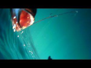 Ψάρεμα με ζωντανό κάνοντας την πρώτη υποβρύχια λήψη