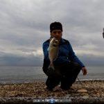 Ψάρεμα τσιπούρας – Τσίμπημα και ανάκτηση