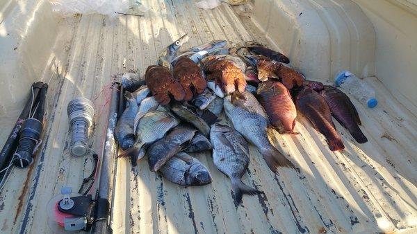 Εντοπίστηκαν οκτώ παραβάσεις για νυχτερινό ψάρεμα