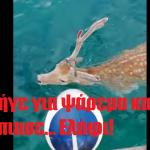 Πήγε για ψάρεμα και έπιασε… Ελάφι!