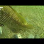 Παγίδα για ψάρεμα- παρακολούθηση με κάμερα