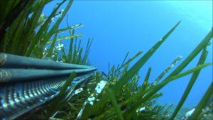 Υποβρύχιο ψάρεμα στη Κύπρο 2018!!(Μαγιάτικο 30kg)