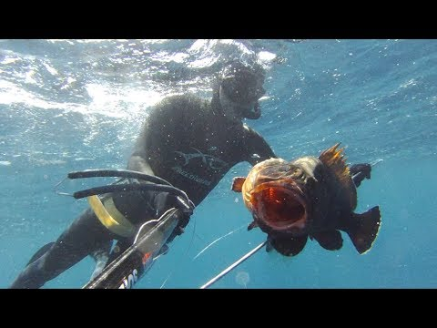 Ψαροντούφεκο – 2 ⅟₂ τεχνικες για Ροφό