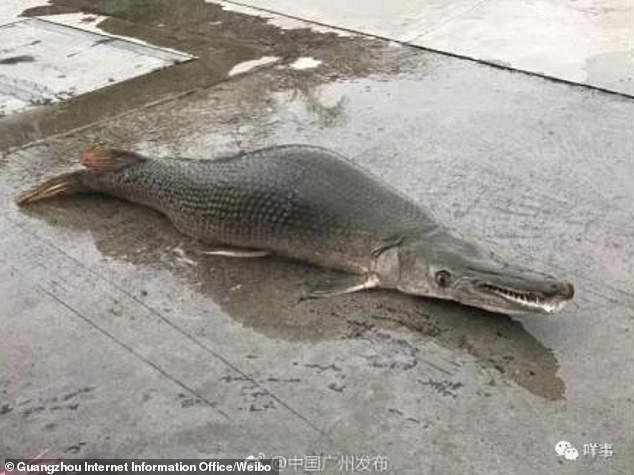 """Ψάρι """"τέρας"""" εμφανίστηκε στην Κίνα- Βίντεο"""