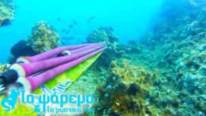 Ψαροντούφεκο που κόβει την ανάσα – Speargun Fishing – Η μαγεία της Θάλασσας
