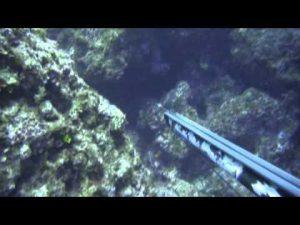 Τεχνικές ψαρέματος στο υποβρύχιο κυνήγι