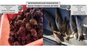 Συλλήψεις και Κατάσχεση για παράνομη αλιεία στο Ηράκλειο