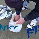 Ψάρεμα τσιπούρας. Το Μυστικό… Ψαρεύοντας με δόλωμα μαμούνι.