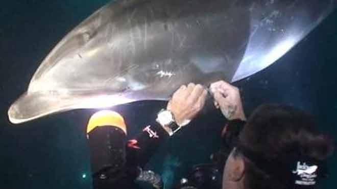 Τραυματισμένο δελφίνι, πλησιάζει δύτη για βοήθεια
