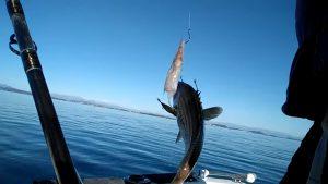 Ψάρεμα σε Αλκυονίδες ημέρες