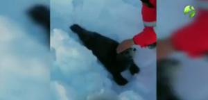 Ψαράδες έσωσαν μωρό φώκια