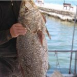 Αυτό θα πει ψαριά! 25 κιλά κρανιός στον Αμβρακικό.